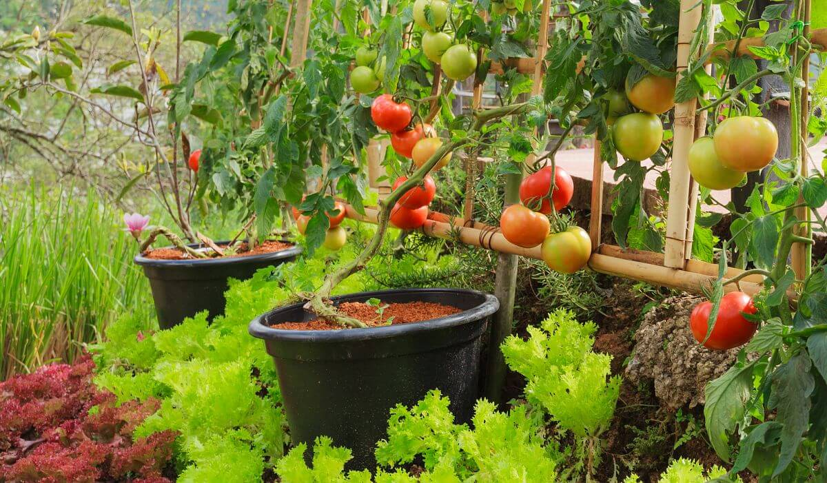 Stunning Backyard Vegetable Garden Ideas That Look Great