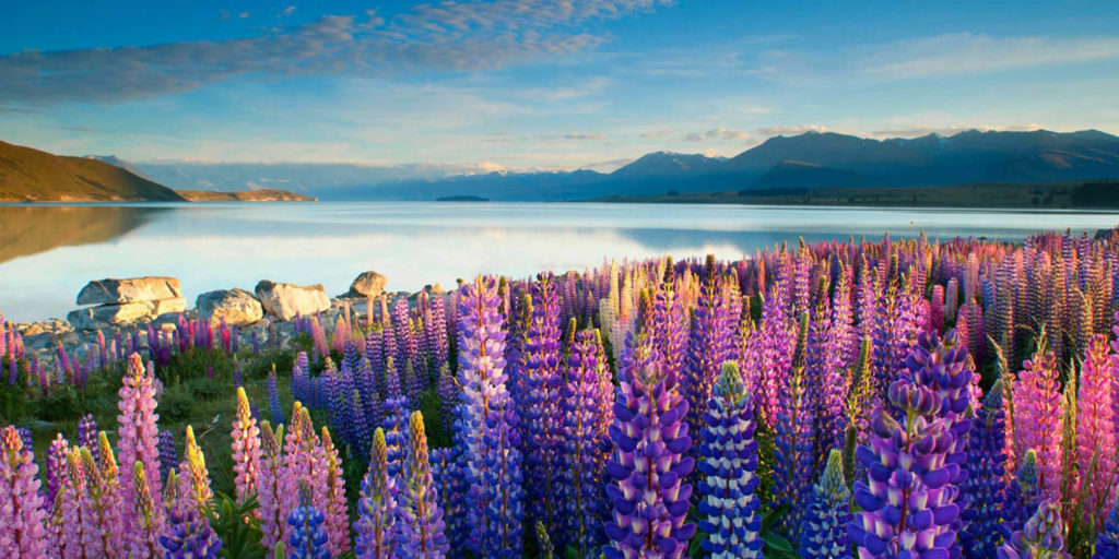 Unforgettable Places to visit in New Zealand