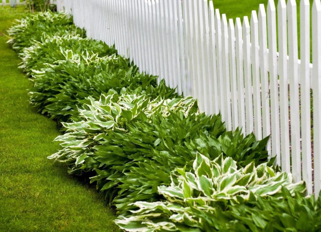 Best Ground Cover Plants that Make your Garden Stunning