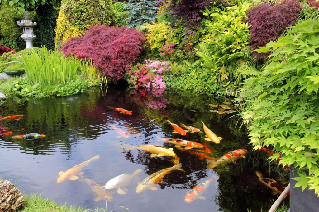 Pond at Any Height