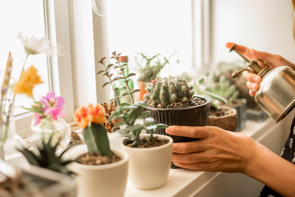 Succulents and Cacti for Indoor Garden