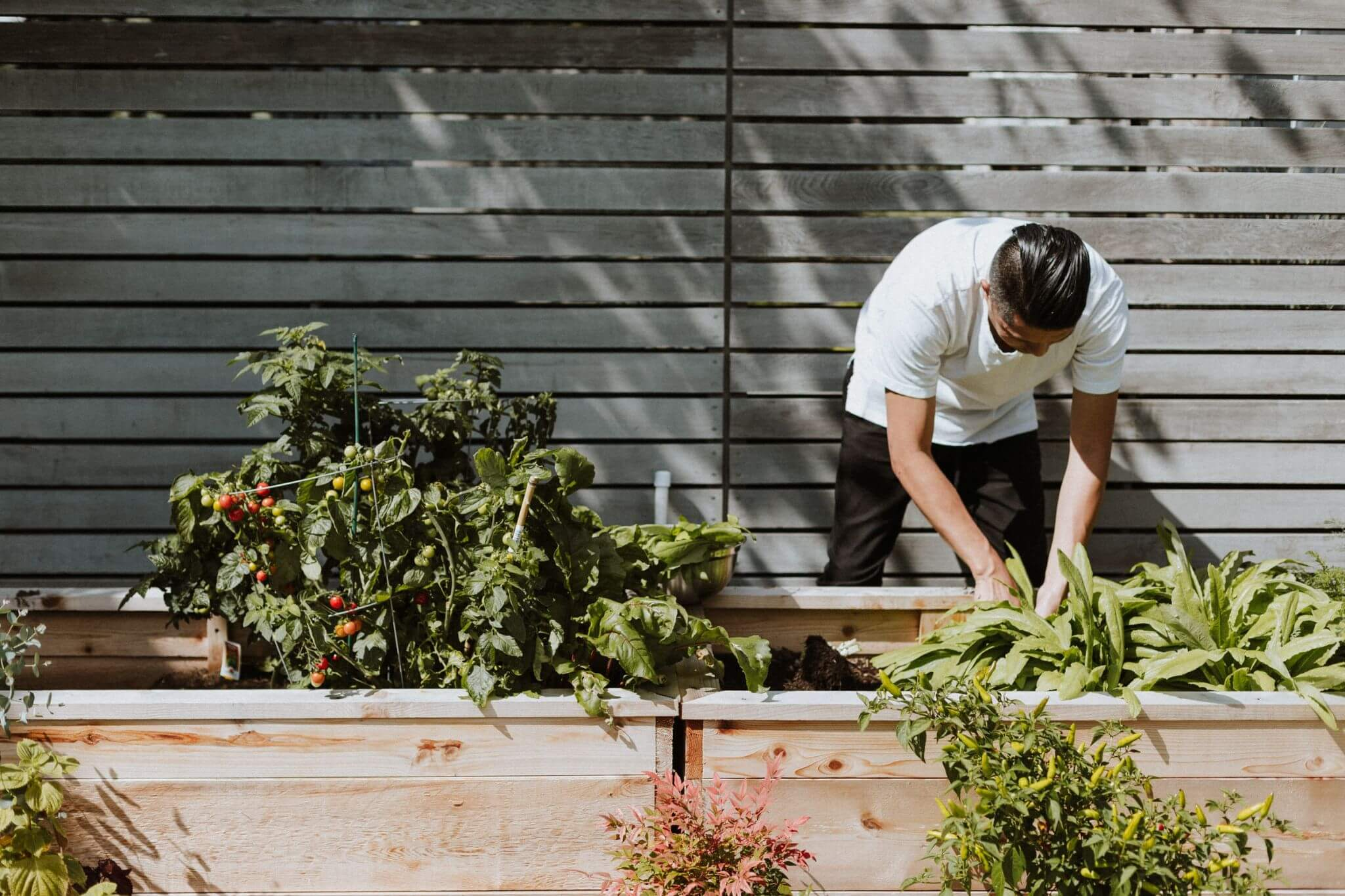 Essential Tips for Creating Your First Garden